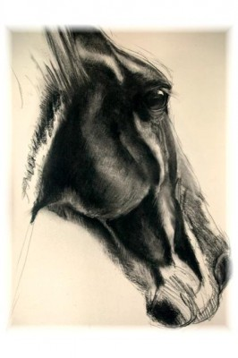 """Untitled"" charcoal on paper, 18 x 24 inches, 2007, SOLD"