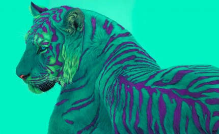 """Green Tiger on Green"" Archival pigment print on watercolor paper, 32 x 50 inches, Edition of 24, Signed and numbered, Embossed with studio seal of Certificate of Authenticity"