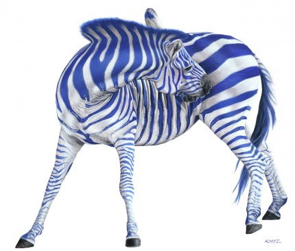 """Zebra with Blue Stripes"" Archival pigment print on watercolor paper, 34 x 40 inches, Edition of 8, Signed and numbered, Embossed with studio seal of Certificate of Authenticity"