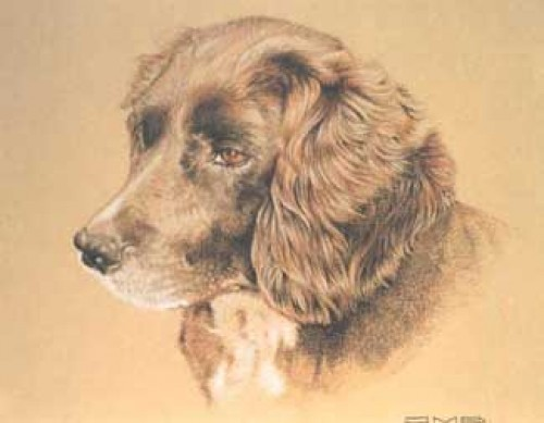 """""""Molly"""" Pastel on paper, 50 x 60 cm, Signed"""