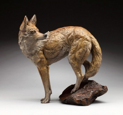 """Desperado"" Bronze, Edition of 15, 20 x 15 inches (Base in Wood or Stone Available) 1/2 life-size sculpture of a coyote. The coyote is like the romanticized outlaw of 'The West'. We admire them for their freedom, yet despise them for their actions. When you see a coyote, they are usually slinking around low to the ground, always looking over their shoulder, just like a Desperado."