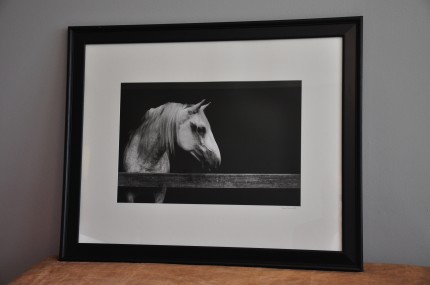 """Left Gaze"" gelatin silver print, 31 x 25 inches matted and framed, signed"