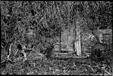 France castle vines, A secret door at the Castle of Pompadour, In the Limousin, France, one of an extensive collection of images in black and white and color of the French national stud farm and environs.
