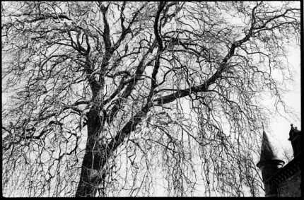 """Pompadour castle and tree, from the series on the National Stud farm, 8x10"""" silver print"""