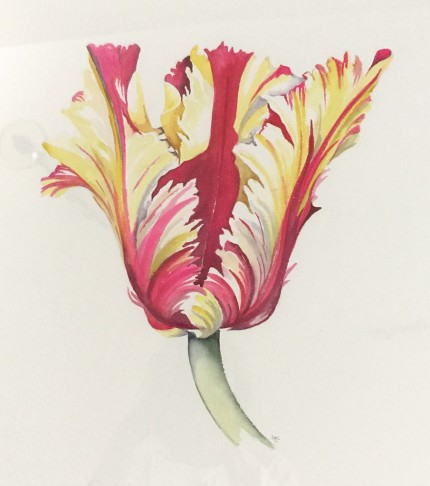 """French Tulips II"" Watercolour on paper, 15 x 16 inches, 22 x 24 inches, Signed in pencil"
