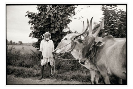 """Fakirappa with his bulls"" Gelatin silver print, Edition of 25, Paper size: 50 x 60 cms, Also available in 40 x 50 cms & 76 x 100 cms"