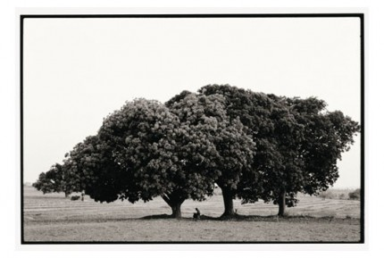 """Monk memorizing under mango trees"" Gelatin silver print, Edition of 25, Paper size: 50 x 60 cms, Also available in 40 x 50 cms & 76 x 100 cms"