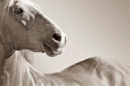 """""""Mustang Pride"""""""