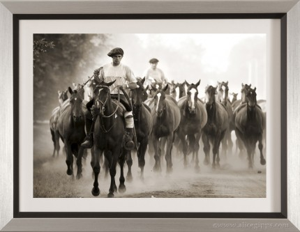 """A Morning Round Up II"" Framed"