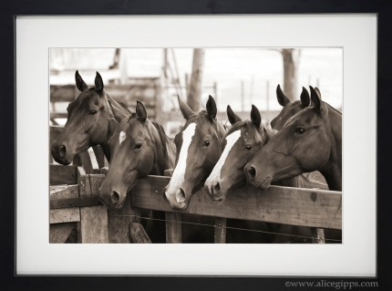 """Young Polo Ponies"" Sepia, framed"