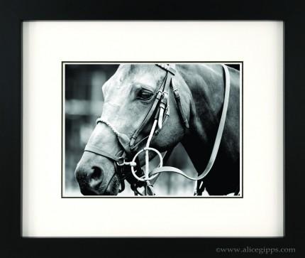 """Polo Pony"" Black & White, framed"