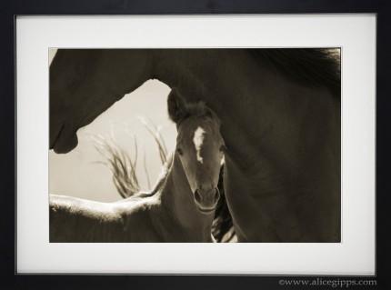 """Mother & Son"" Framed"
