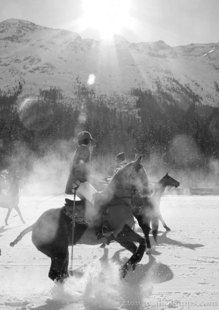 """""""Snow Polo"""" Black & White"""