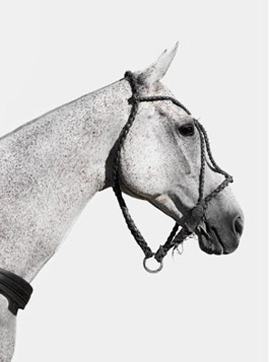 """""""Polo Pony Portrait"""" UK 2018, Archival pigment print, Edition TBC: 16.5 x 11.7 inches, Signed & Numbered"""