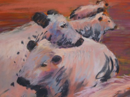 """""""Laid Back Cows"""" pastel on paper 18 x 21 inches"""