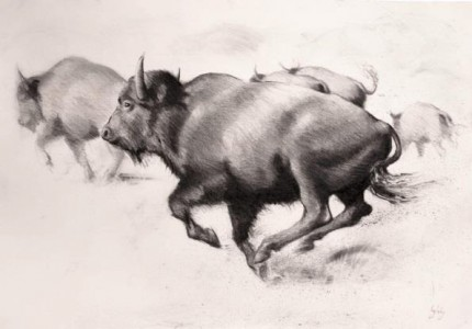 """""""Bison"""" Charcoal on paper, A0, Signed"""