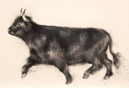 """""""Highland Show Off"""" Charcoal on paper, A2, Signed"""