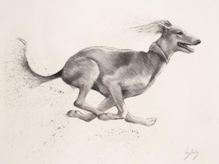 """""""Saluki"""" Charcoal on paper, A1, Signed"""