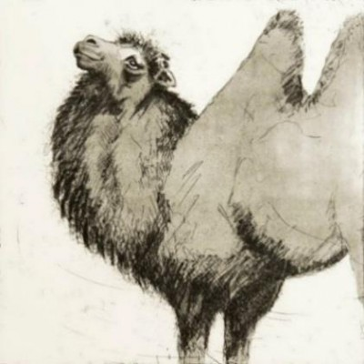"""""""Camel"""" Etching & Aquatint, Edition of 25, 45 x 45 cm, Signed"""