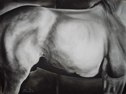 """Equus"" charcoal on paper, 24 x 18 inches, 2008, SOLD"