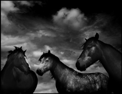 Horses #52, Limited Edition of 25. 12x16 inches, Limited Edition of 25. 22x28 inches, Limited Edition of 8. 44x52.5 inches, Printed on Hahnemuhle Photo Rag 308g Fine Art Archival paper.