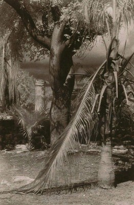 """""""Columna (El Rey)"""" Toned gelatin silver print, 13 x 8.5 inches, Signed & Matted"""