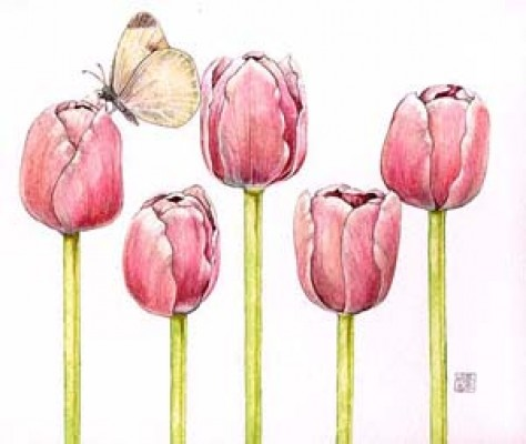 Tulips 5, Watercolor, colored pencil on paper, 7 1/2 x 9 1/2