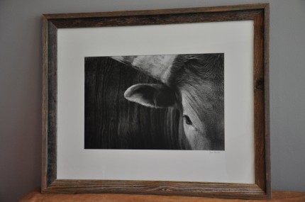 """Long Horn"" gelatin silver print, 31 x 25 inches matted and framed, signed"