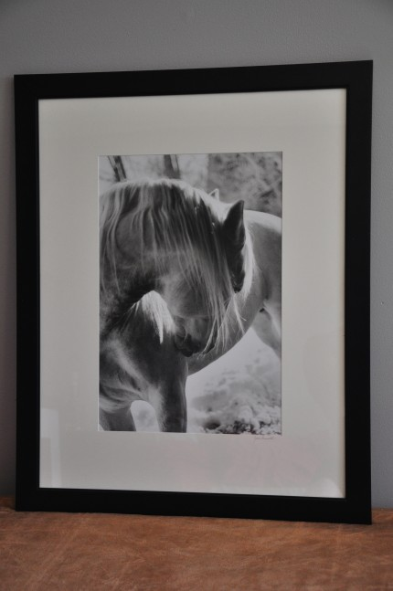 """Backlit Lipizzan"" gelatin silver print, 31 x 25 inches matted and framed, signed"