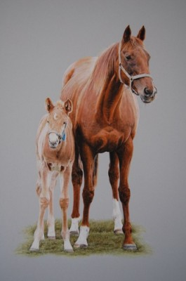 Mare and foal, Pastel on mountboard, 41cm x 26cm