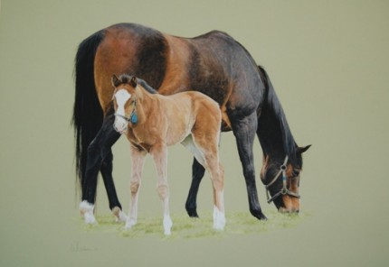 Mare and foal, Pastel on mountboard, 35cm x 33cm