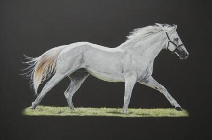 Thoroughbred stallion, Pastel on mountboard, 46cm x 26cm