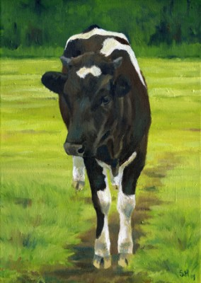 O'Driscoll's Heifer, Oil on Canvas, 14 x 12""