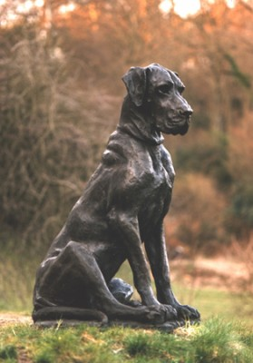 """Great Dane"" Life size, Bronze, Edition: 4/7, B 4/4FB"