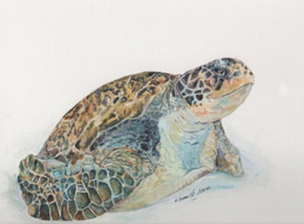 """""""Green Sea Turtle Study"""" Acrylic on canvas paper, 9 x 12 inches, Signed"""