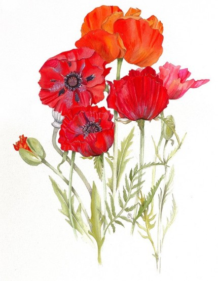 """Poppies"" Watercolour on paper, 31 x 23 inches, Signed in pencil"
