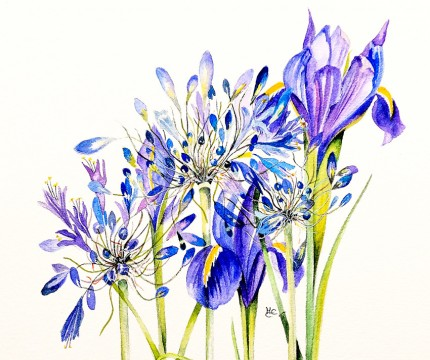 """Agapanthus & Blue Iris"" Watercolour on paper, 10 x 11.5 inches, Signed in pencil"