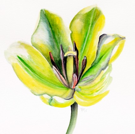"""Green Tulip"" Watercolour on paper, 10 x 9 inches, Signed in pencil"