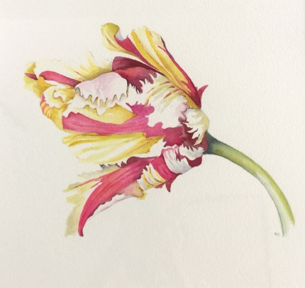 """French Tulips I"" Watercolour on paper, 15 x 16 inches, 22 x 24 inches, Signed in pencil"