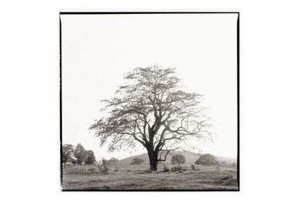 """""""Tree behind Nandigaddi"""" Gelatin silver print, Edition of 25, Paper size: 50 x 60 cms, Also available in 40 x 50 cms & 76 x 100 cms"""