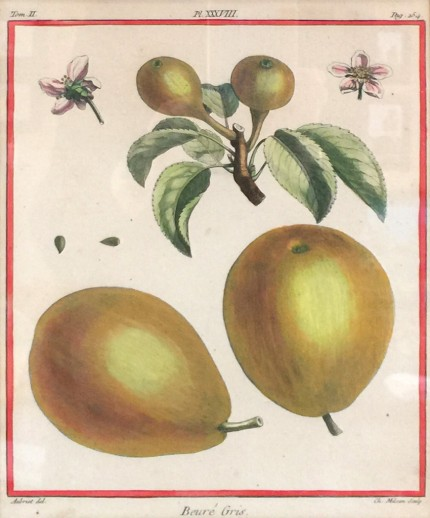 Antique Botanicals, 1768, Original Hand Coloured Copperplate Engravings, Publication: Traité des Arbres Fruitiers (Paris 1768), 10 x 8 inches, 18 x 16 inches, Matted & Framed