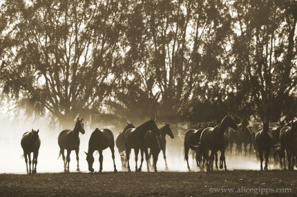 """A Morning Round Up I"" Sepia"