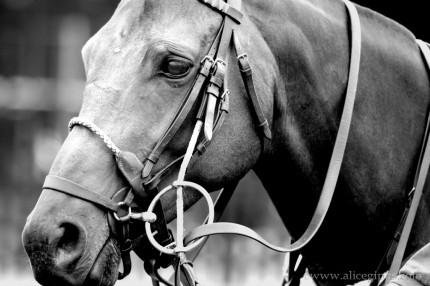 """""""Polo Pony"""" Black & White"""