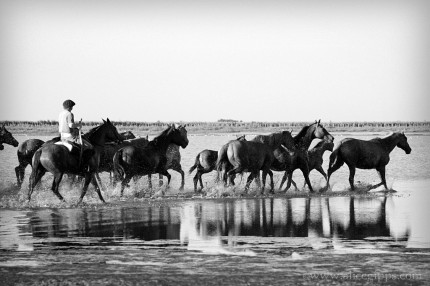 """""""Water Gaucho III"""" Black & White, framed"""