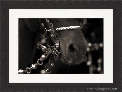"""""""Argentine Tack I"""" Sepia, framed"""