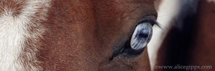 """A Blue Eye I"""
