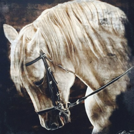 """Herodes Strength"" Equus Series, Digital print on fabric with chalk overlay, 48 x 48 inches, Signed"