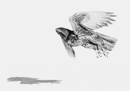 """Falcon"" UAE 2012, Archival pigment print, 11.7 x 16.5 inches"