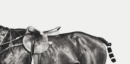 """Three Quarter Horse"" Photogravure Etchings"