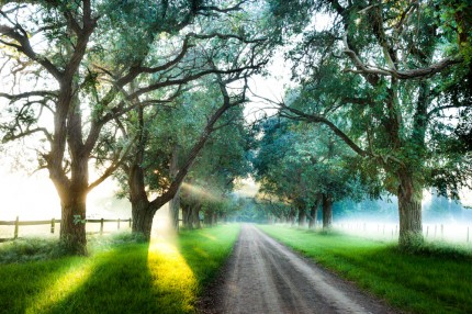 """Morning Mist"" Print on archival fine art paper, Edition: 5/12, 3.6 x 5.4 feet, Singed & Numbered"